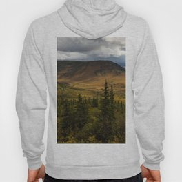 Alaska USA Denali Nature Spruce mountain Parks landscape photography Mountains park Scenery Hoody