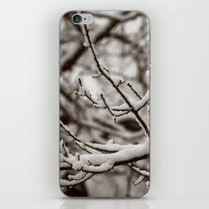 Wintry Spring iPhone & iPod Skin