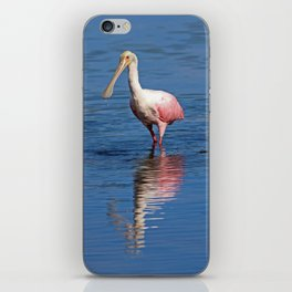 Roseate Spoonbill at Ding IV iPhone Skin