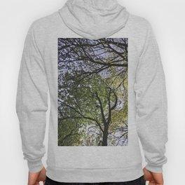 Dancing Trees Hoody