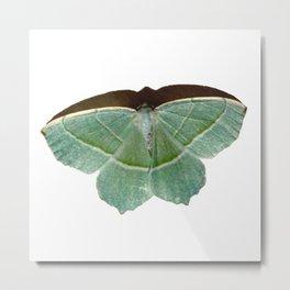 Goodenough Moth Metal Print