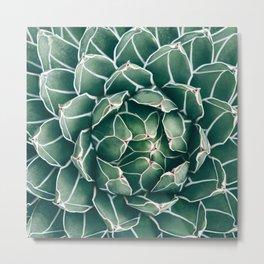 Succulent bloom II Metal Print