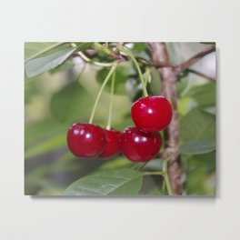 Cherries, fresh from the tree Metal Print