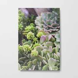 Blushing Succulents Metal Print