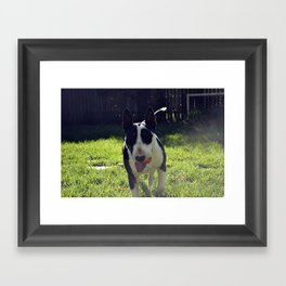 Rocky Framed Art Print