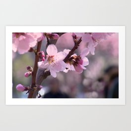 Pink spring time Art Print