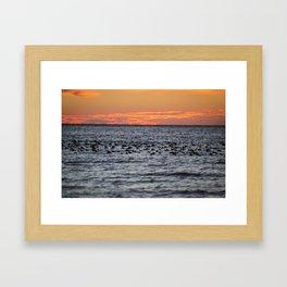 Blue-bill Duck Sunrise Framed Art Print