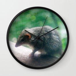 Kangaroo Island Dunnart Wall Clock