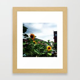 Sunflowers on Main Street - Beacon NY Framed Art Print