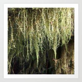 Moss Dew Drops Art Print