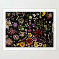 Flowers of Plants Native to Manitoba, Canada Art Print