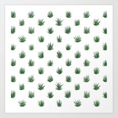 Haworthia Succulents Art Print