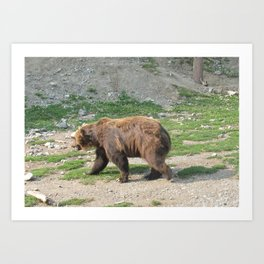 Grizzly Walkin Art Print