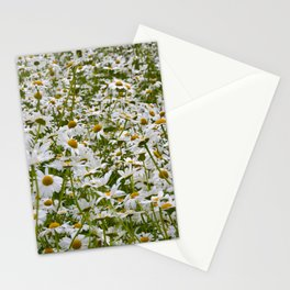 White and Yellow Daisies Stationery Cards
