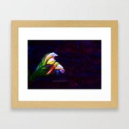 """Cactus Flower At Sunset #85"" Photograph Framed Art Print"