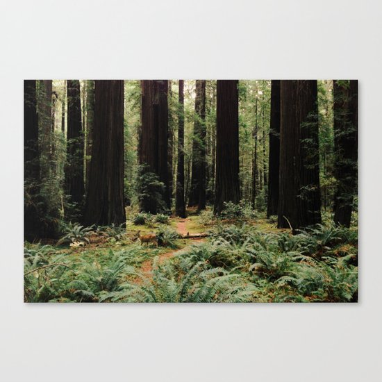 Deer in Redwood Forest Canvas Print