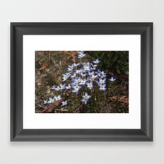 Wild Flowers Bluets Framed Art Print