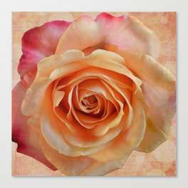 Artistic gorgeous rose with a textured background Canvas Print
