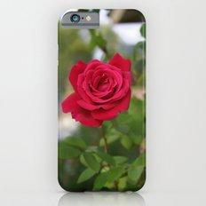 Rose 1 Slim Case iPhone 6s