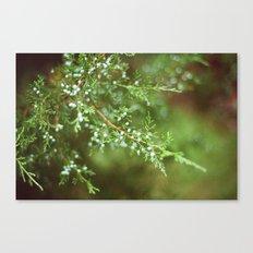 Pine Mist Series: 2 Canvas Print