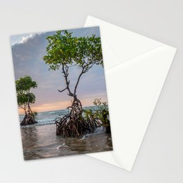 Mangrove Trees On The Beach At Sunset Stationery Cards