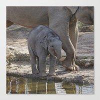 baby elephant Canvas Prints featuring Elephant Baby by MehrFarbeimLeben
