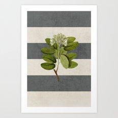 botanical stripes 5 -gray Art Print