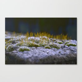 Dark Moss Canvas Print