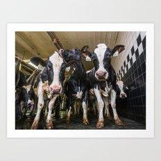 Cow Sisters Art Print