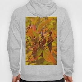 Autumn colour Hoody