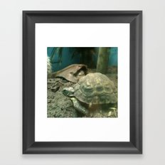 Giant Turtle Framed Art Print