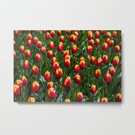 Red Tulip Field-Amsterdam Keukenhof Flower Print Metal Print