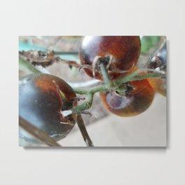 Heated tomatoes Metal Print