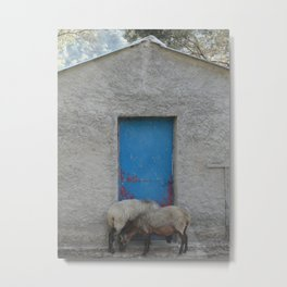 Sheep to Door Metal Print