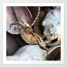Crabe &Coquillages Art Print