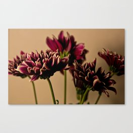 Stand Me Up Canvas Print
