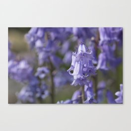 The Bluebell Patch Canvas Print