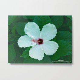 HIBICUS FLOWER Metal Print