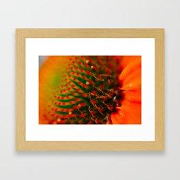 Gaillardia Aristata Pursh Framed Art Print