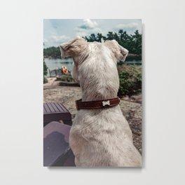 Dog on vacation Metal Print