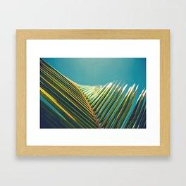 Palm Leaves in the Sun Framed Art Print