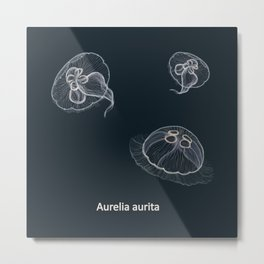 Hand drawn vector illustration of jellyfish Aurelia aurita, also called the common jellyfish, moon jellyfish, moon jelly Metal Print