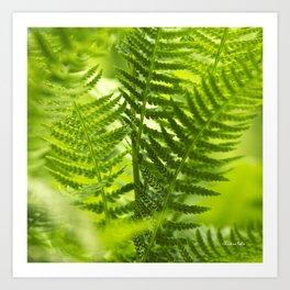 Green Fern Abstract Art Print