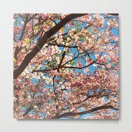 Under the Dogwood Branches Metal Print