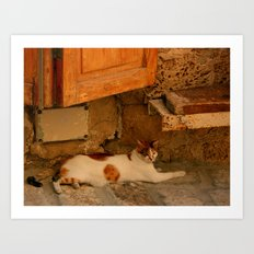 Stray Cat in Israel Art Print