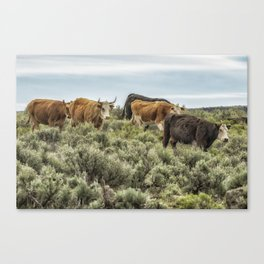 Five Cows Coming Down a Hill Canvas Print