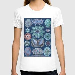 Ernst Haeckel Ascidiae Sea Squirts Cool Blues T-shirt