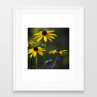 daisies Framed Art Prints featuring Daisies by Christina Rollo