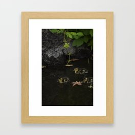Mallard Duckings Framed Art Print