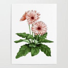Gerbera Daisy Poster